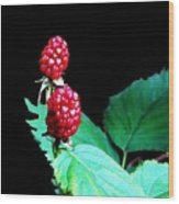 Unripe Blackberries Wood Print