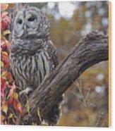 Untitled Owl Wood Print
