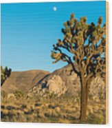 Untouched Joshua Tree National Park Wood Print