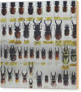 Unusual Pattern Made Out Of Many Stag Beetles Of Different Sizes Wood Print