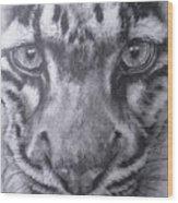 Up Close Clouded Leopard Wood Print