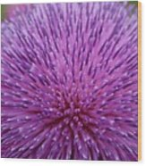 Up Close On Musk Thistle Bloom Wood Print