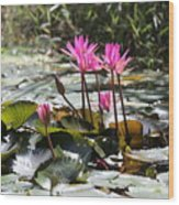 Up Close Water Lilies  Wood Print