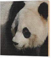 Up Close With A Gorgeous Giant Panda Bear Wood Print