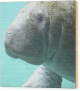Up Close With A Manatee Wood Print