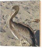 Up Close With A Pelican On A Sand Beach Wood Print