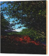 Up Hill Wood Print