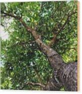 Up The Tree Wood Print