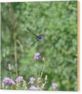 Up, Up And Away-black Swallowtail Butterfly Wood Print