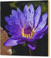 Upbeat Violet Elegance - The Beauty Of Waterlilies  Wood Print