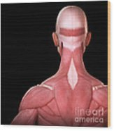 Upper Body Muscles Wood Print