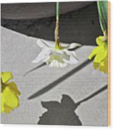 Upside Down Daffodils Wood Print