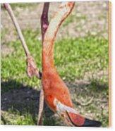 Upside Down Flamingo Wood Print