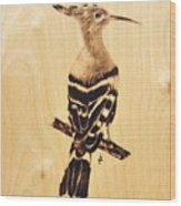 Upupa Wood Print