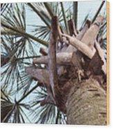 Upward Palm Wood Print