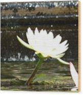 Urban Lily Wood Print