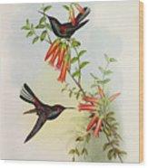 Urochroa Bougieri Wood Print