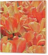 United States Capital Tulips Wood Print