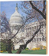 Us Capitol Building And Cherry Wood Print