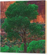 Utah - Cottonwood Wood Print