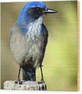Utah Bird Wood Print