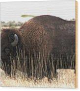 Utah Bison  Wood Print