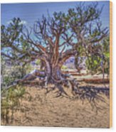 Utah Juniper On The Climb To Delicate Arch Arches National Park Wood Print