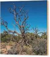 Utah Juniper Wood Print