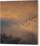 V Formation At Sunset  Wood Print