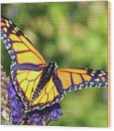 V Shaped Monarch  Wood Print