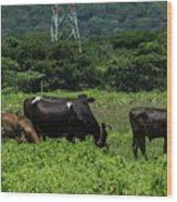 Vacas De Ahuachapan 2 Wood Print