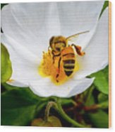 Vacaville Honey Bee Wood Print