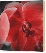 Valentine Orchid Wood Print