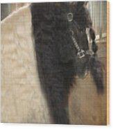 Valentino's Mane Wood Print