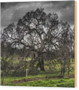 Valley Oak Wood Print