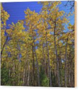 Valley Of The Five Lakes Trail Wood Print