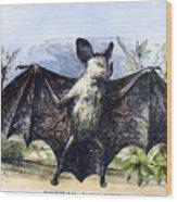 Vampire Bat Wood Print