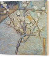 Van Gogh: Peartree, 1888 Wood Print