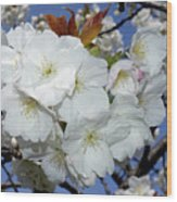 Vancouver 2017 Spring Time Cherry Blossoms - 5 Wood Print