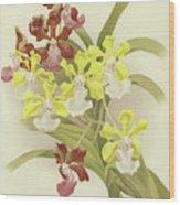 Vanda Insignis And Var Scroederiana  Wood Print