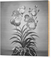 Vanda Orchids In Black And White Wood Print