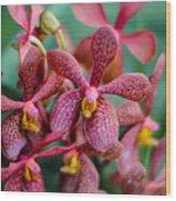 Vanda Orchids Wood Print
