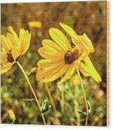 Variableleaf Sunflower Wood Print