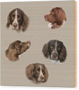 Variations Of A Spaniel Wood Print