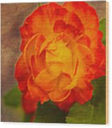 Variegated Beauty - Rose Floral Wood Print