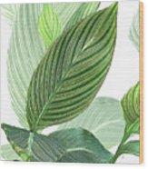 Variegated Wood Print