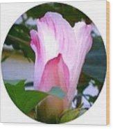 Variegated Hibiscus Flower In Circle Wood Print