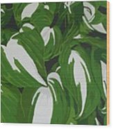 Variegated Hostas Wood Print