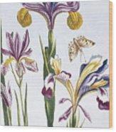 Variegated Iris Wood Print