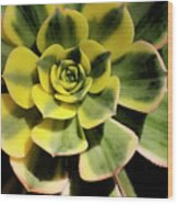 Variegated Succulent Wood Print